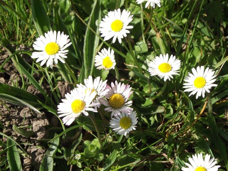Energie du printemps recettes détox