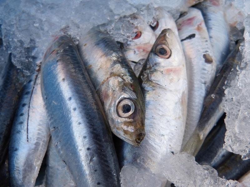 Sardines riche en oméga 3