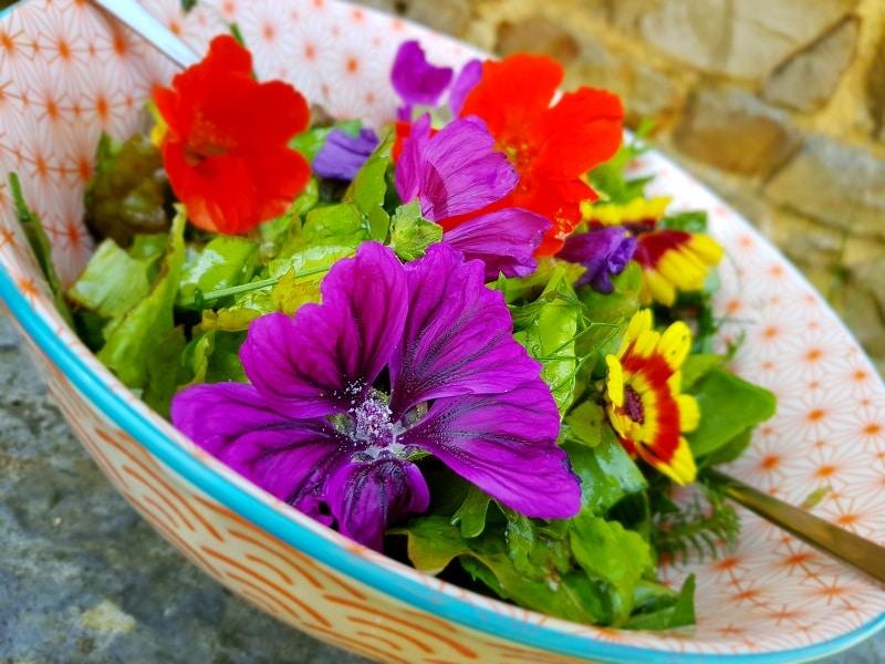 quiche sans gluten aux légumes